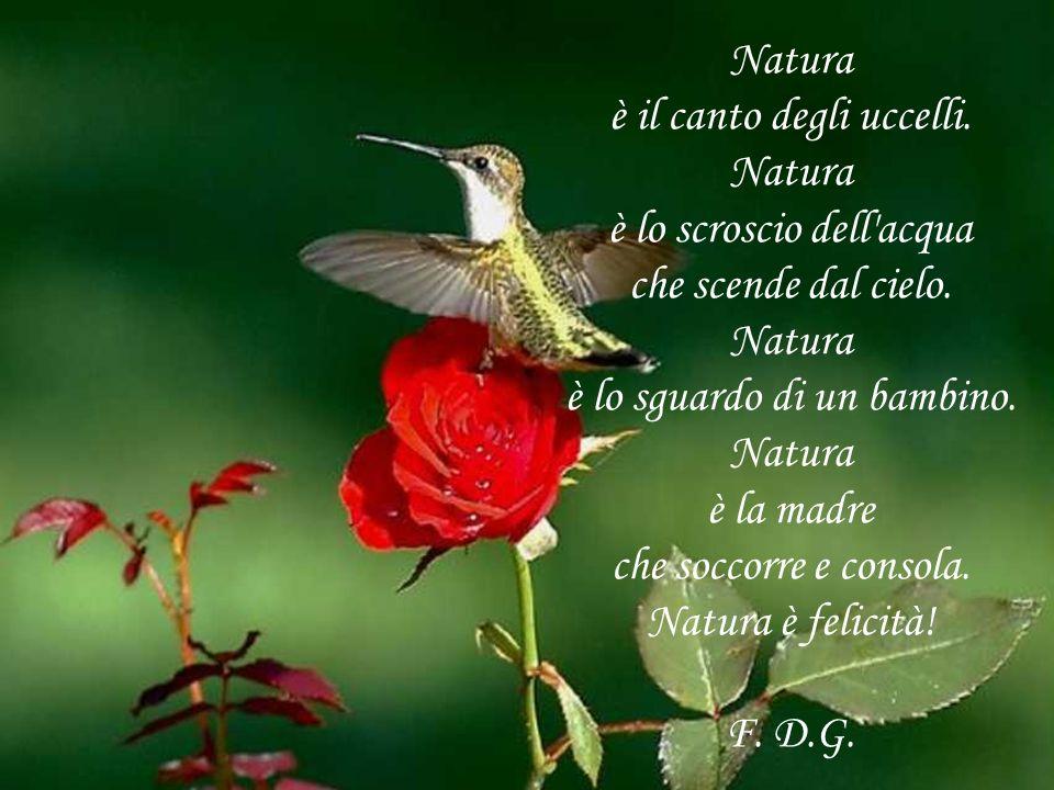 Natura è il canto degli uccelli. Natura è lo scroscio dell'acqua che scende dal cielo. Natura è lo sguardo di un bambino. Natura è la madre che soccor