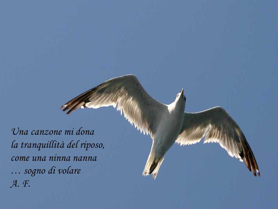 Una canzone mi dona la tranquillità del riposo, come una ninna nanna … sogno di volare A. F.