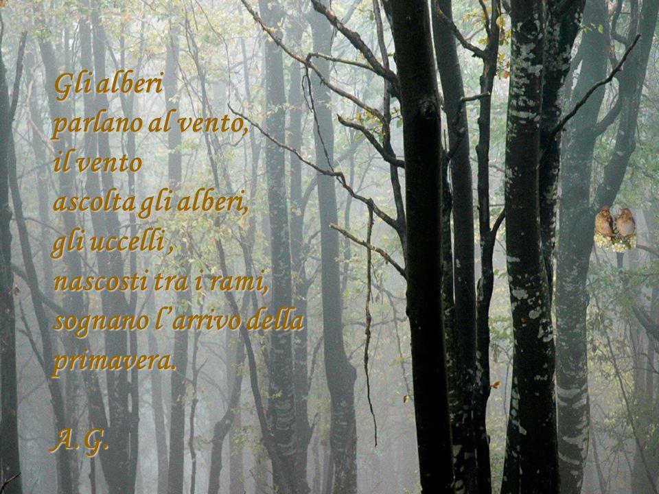 Gli alberi parlano al vento, il vento ascolta gli alberi, gli uccelli, nascosti tra i rami, sognano larrivo della primavera. A.G.