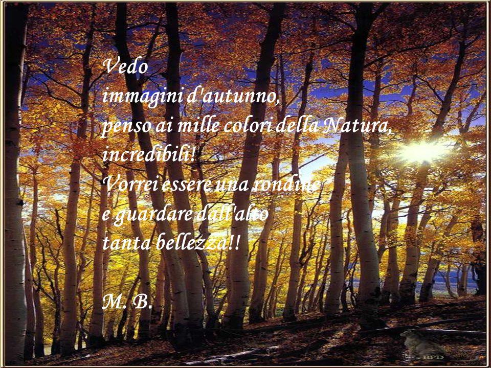 Vedo immagini d'autunno, penso ai mille colori della Natura, incredibili! Vorrei essere una rondine e guardare dall'alto tanta bellezza!! M. B.