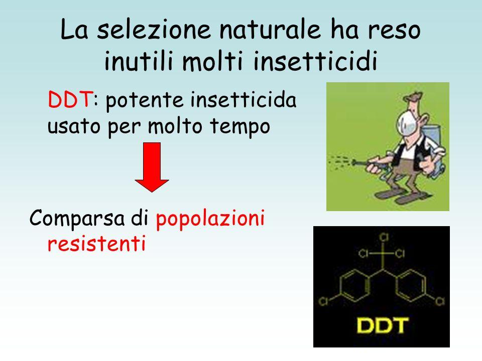 La selezione naturale ha reso inutili molti insetticidi DDT: potente insetticida usato per molto tempo Comparsa di popolazioni resistenti