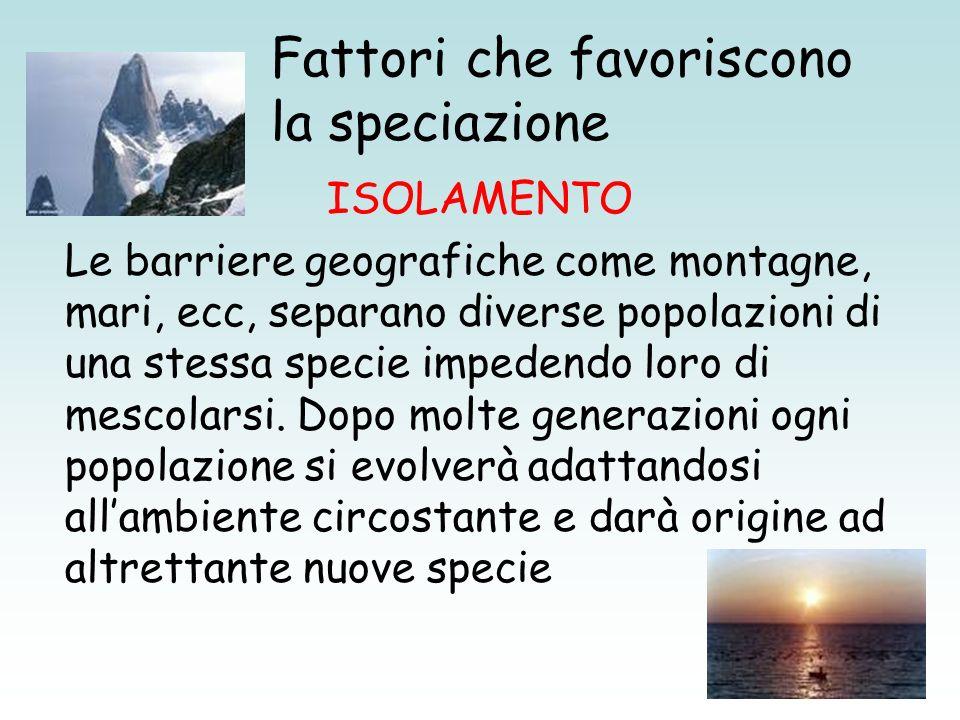 Fattori che favoriscono la speciazione ISOLAMENTO Le barriere geografiche come montagne, mari, ecc, separano diverse popolazioni di una stessa specie
