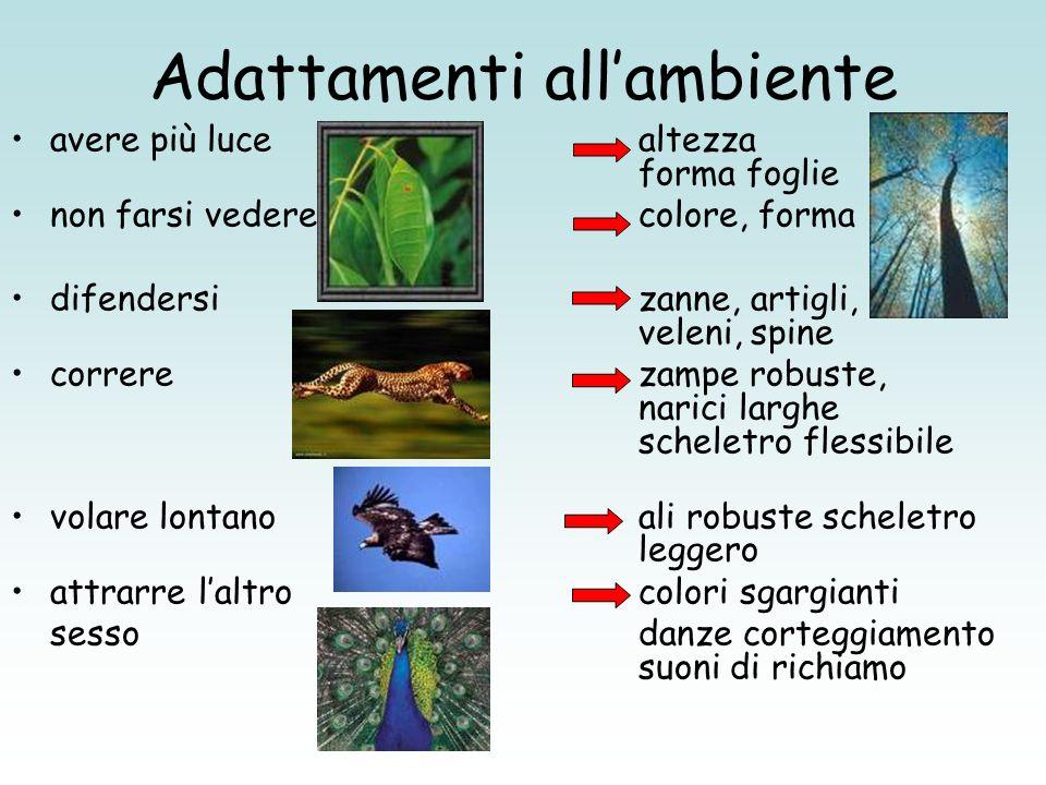 Adattamenti allambiente avere più lucealtezza forma foglie non farsi vederecolore, forma difendersizanne, artigli, veleni, spine correrezampe robuste,