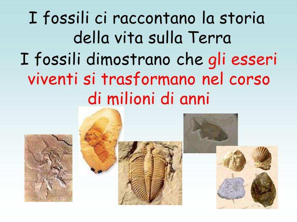 I fossili dimostrano che gli esseri viventi si trasformano nel corso di milioni di anni I fossili ci raccontano la storia della vita sulla Terra