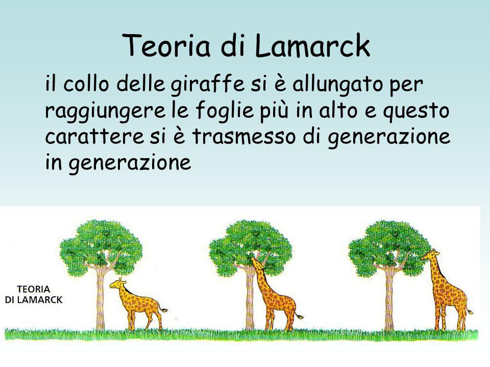 Teoria di Lamarck il collo delle giraffe si è allungato per raggiungere le foglie più in alto e questo carattere si è trasmesso di generazione in gene