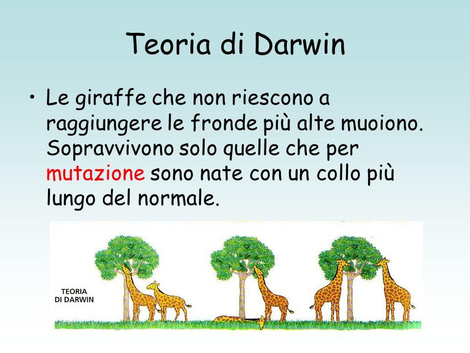Teoria di Darwin Le giraffe che non riescono a raggiungere le fronde più alte muoiono. Sopravvivono solo quelle che per mutazione sono nate con un col