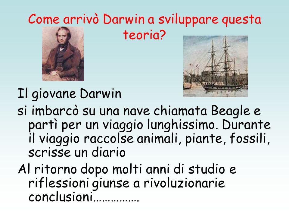Come arrivò Darwin a sviluppare questa teoria? Il giovane Darwin si imbarcò su una nave chiamata Beagle e partì per un viaggio lunghissimo. Durante il