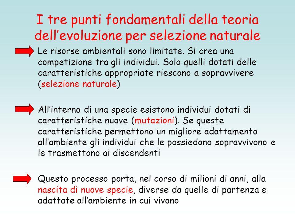 I tre punti fondamentali della teoria dellevoluzione per selezione naturale Le risorse ambientali sono limitate. Si crea una competizione tra gli indi