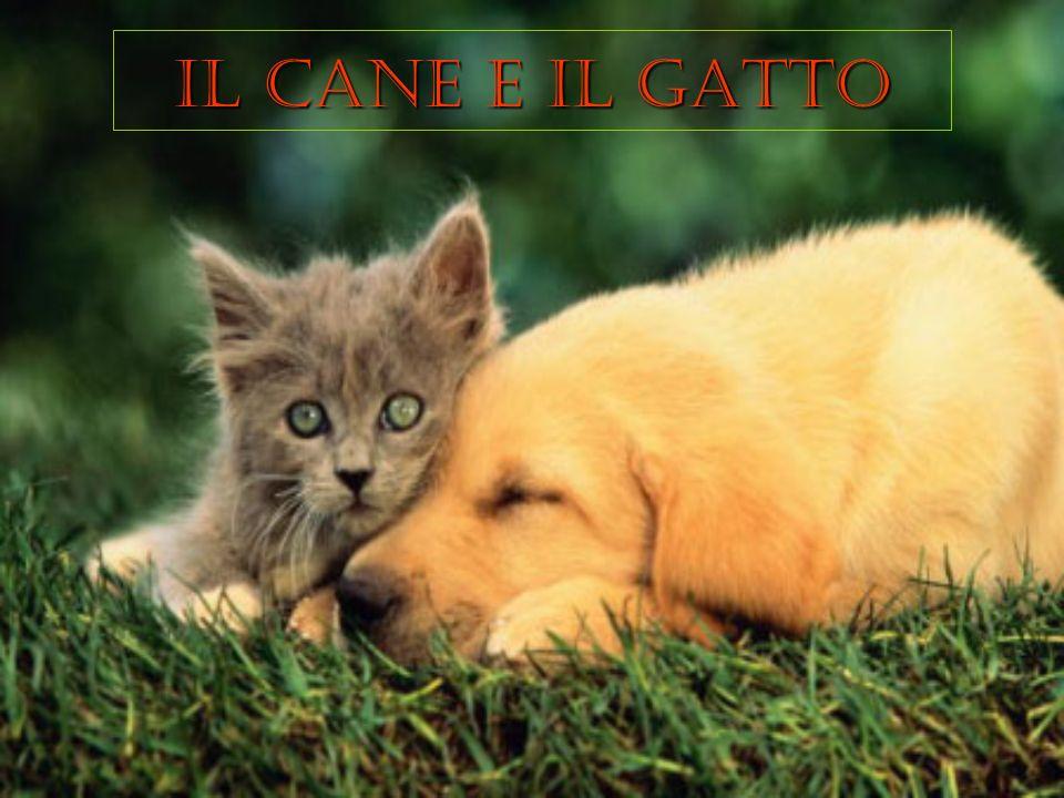C era una volta un gatto ed un cane, che litigavano sempre.