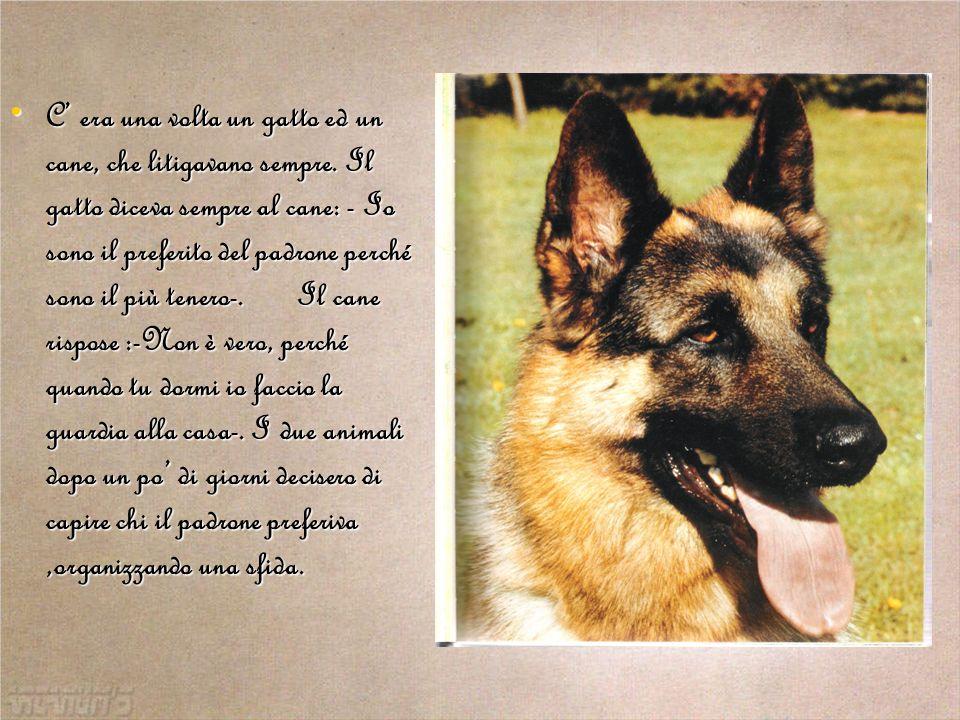 Il cane rispose :- Non è vero, perché quando tu dormi io faccio la guardia alla casa-.