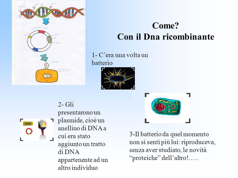 Come? Con il Dna ricombinante 1- Cera una volta un batterio 2- Gli presentarono un plasmide, cioè un anellino di DNA a cui era stato aggiunto un tratt