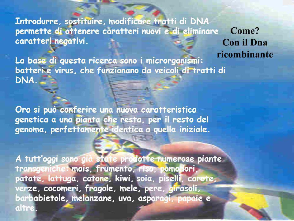 Come? Con il Dna ricombinante Introdurre, sostituire, modificare tratti di DNA permette di ottenere caratteri nuovi e di eliminare caratteri negativi.