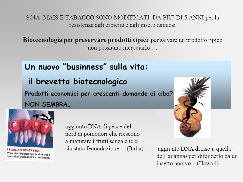 Un nuovo businness sulla vita: il brevetto biotecnologico Prodotti economici per crescenti domande di cibo? NON SEMBRA… SOIA MAIS E TABACCO SONO MODIF