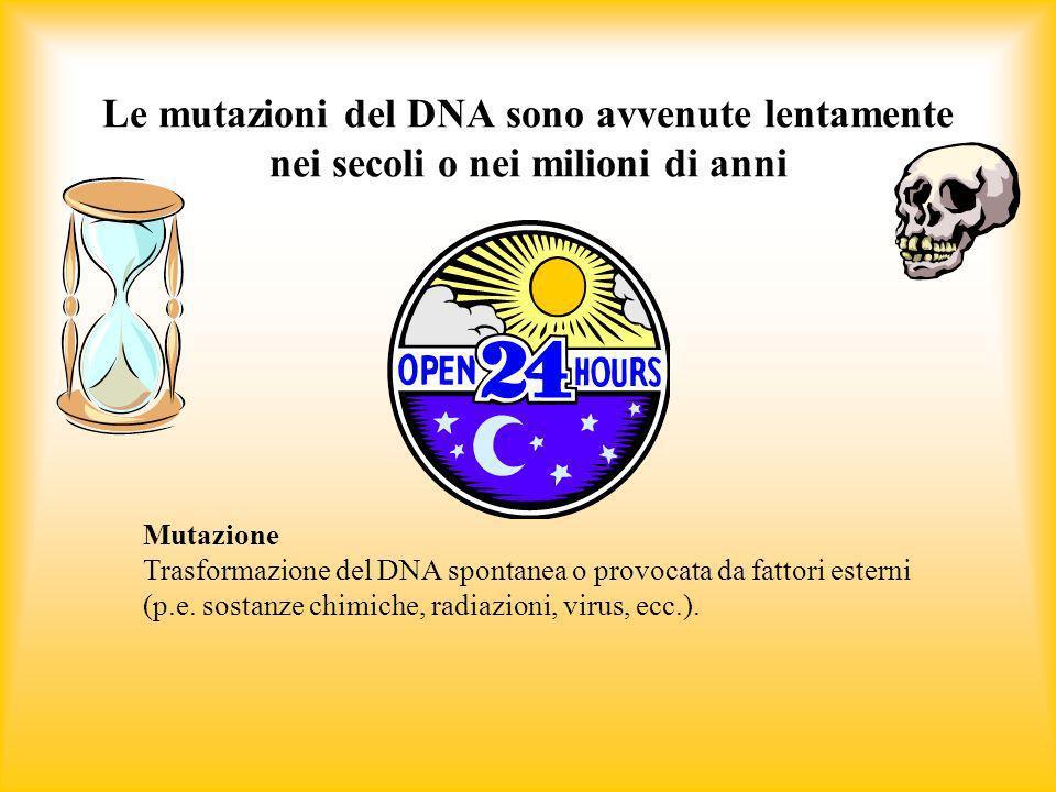 Le mutazioni del DNA sono avvenute lentamente nei secoli o nei milioni di anni Mutazione Trasformazione del DNA spontanea o provocata da fattori ester