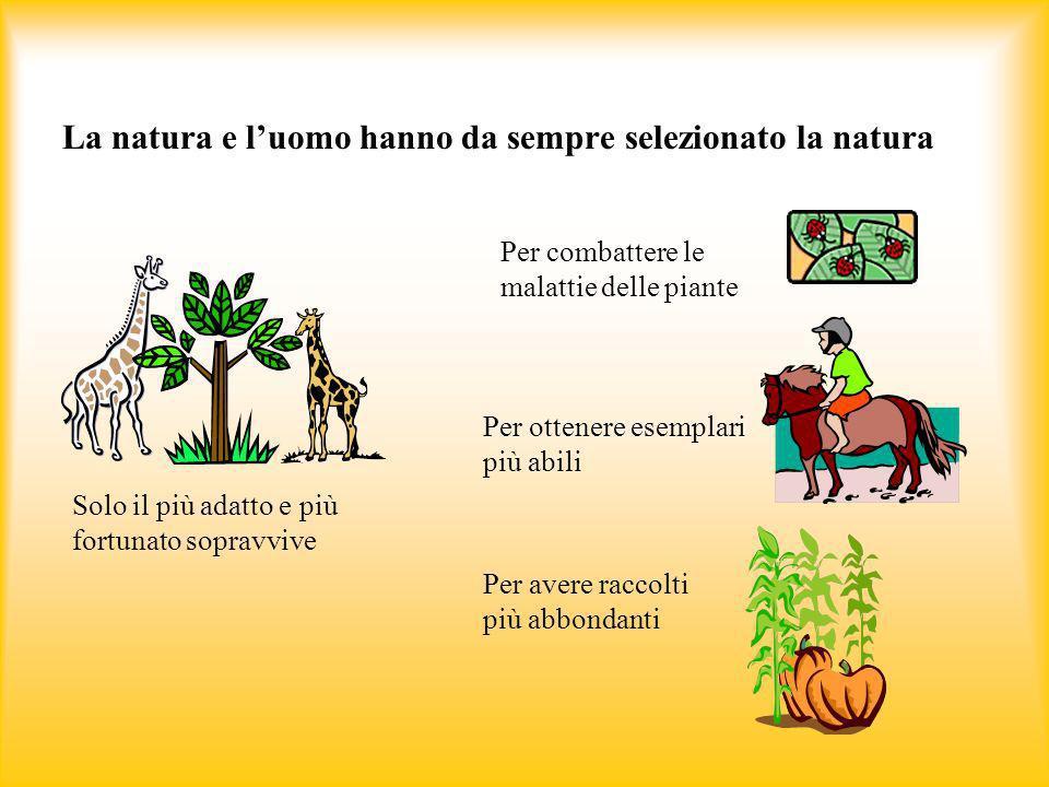 La natura e luomo hanno da sempre selezionato la natura Solo il più adatto e più fortunato sopravvive Per combattere le malattie delle piante Per otte