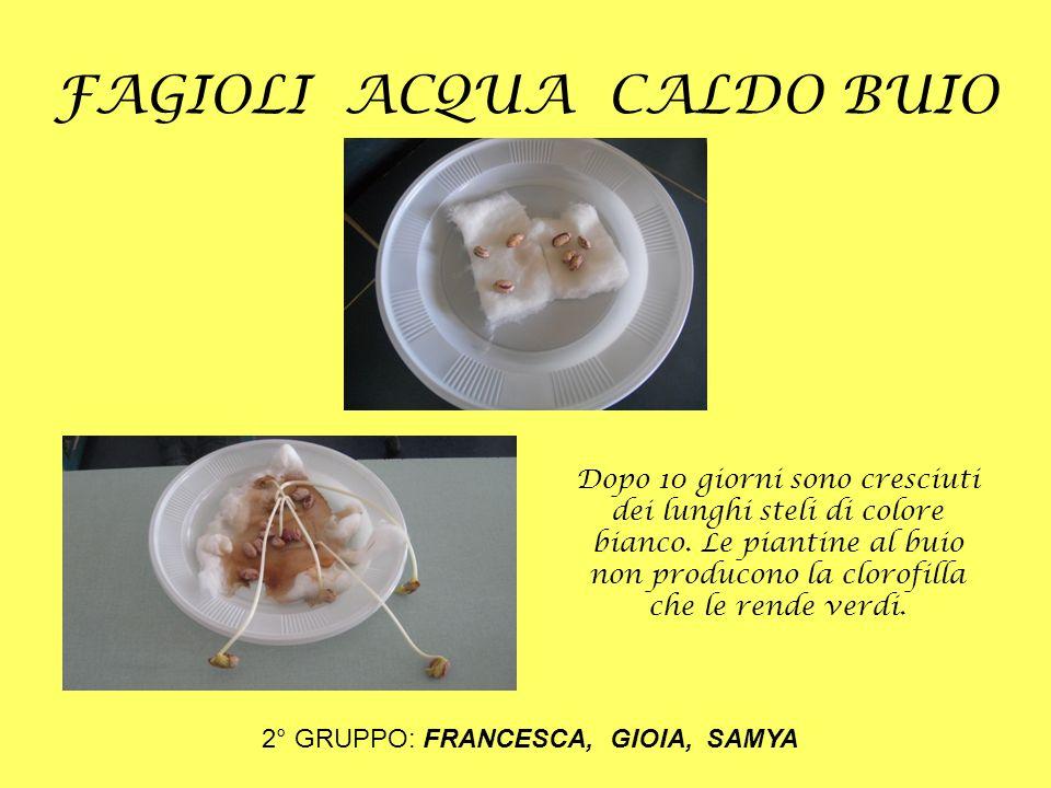 FAGIOLI ACQUA FREDDO BUIO 3° GRUPPO: VERONICA, CATERINA, MARIA T.