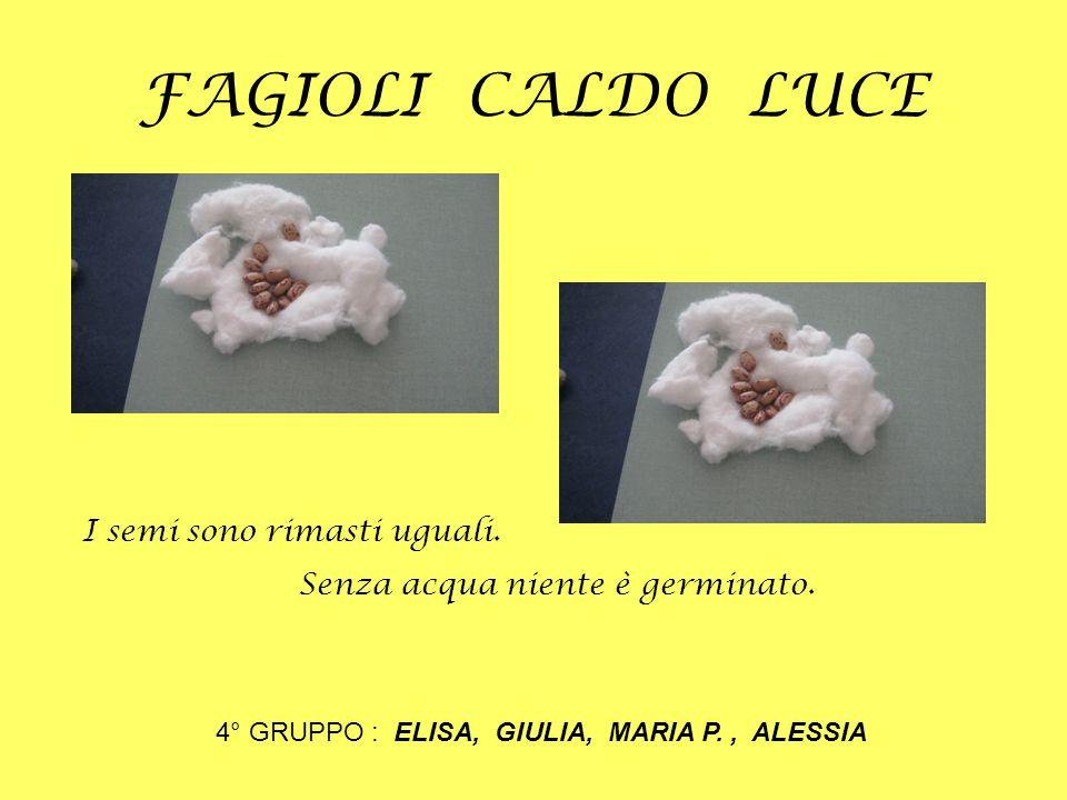 FAGIOLI CALDO LUCE 4° GRUPPO : ELISA, GIULIA, MARIA P., ALESSIA I semi sono rimasti uguali. Senza acqua niente è germinato.