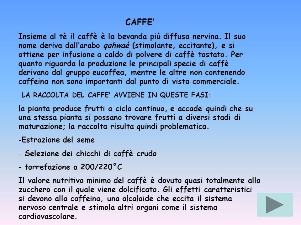 CAFFE Insieme al tè il caffè è la bevanda più diffusa nervina. Il suo nome deriva dallarabo qahwaè (stimolante, eccitante), e si ottiene per infusione