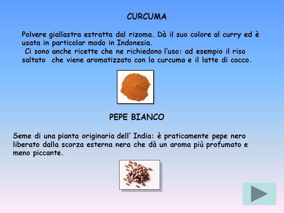 CURCUMA Polvere giallastra estratta dal rizoma. Dà il suo colore al curry ed è usata in particolar modo in Indonesia. Ci sono anche ricette che ne ric