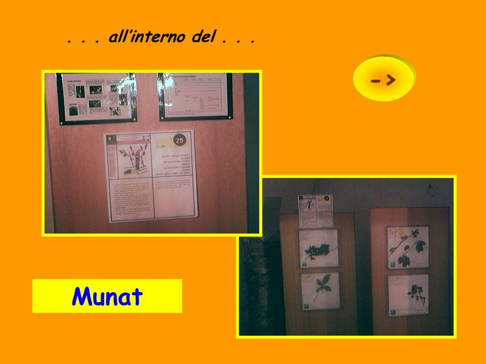 Munat... Museo Naturalistico. ->