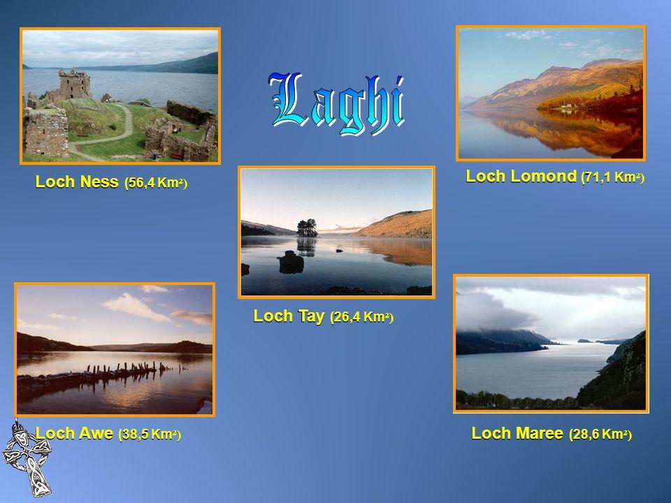 Loch Ness (56,4 Km ²) Loch Awe (38,5 Km ²) Loch Lomond (71,1 Km ²) Loch Maree (28,6 Km ²) Loch Tay (26,4 Km ²)