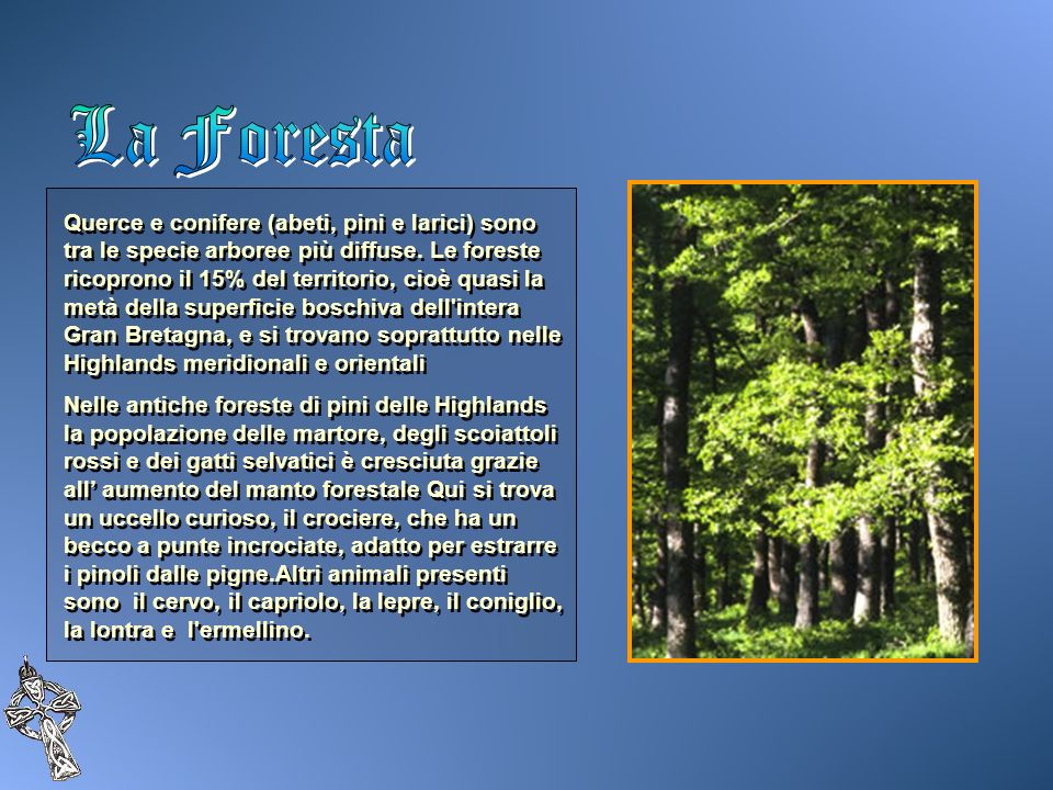 Querce e conifere (abeti, pini e larici) sono tra le specie arboree più diffuse. Le foreste ricoprono il 15% del territorio, cioè quasi la metà della
