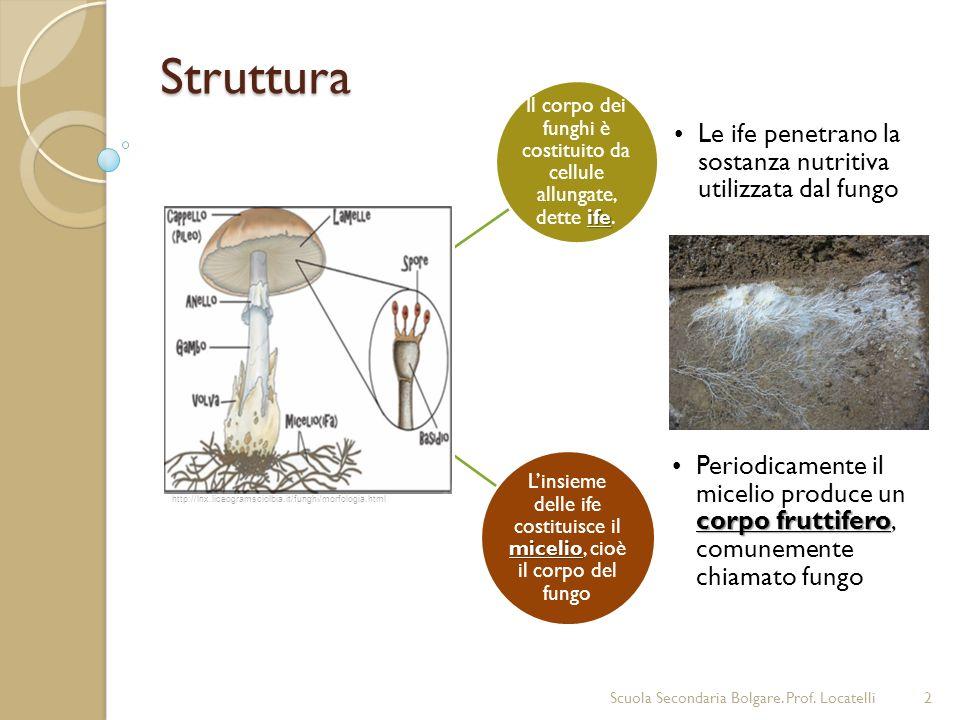 Struttura 2 ife Il corpo dei funghi è costituito da cellule allungate, dette ife. Le ife penetrano la sostanza nutritiva utilizzata dal fungo micelio