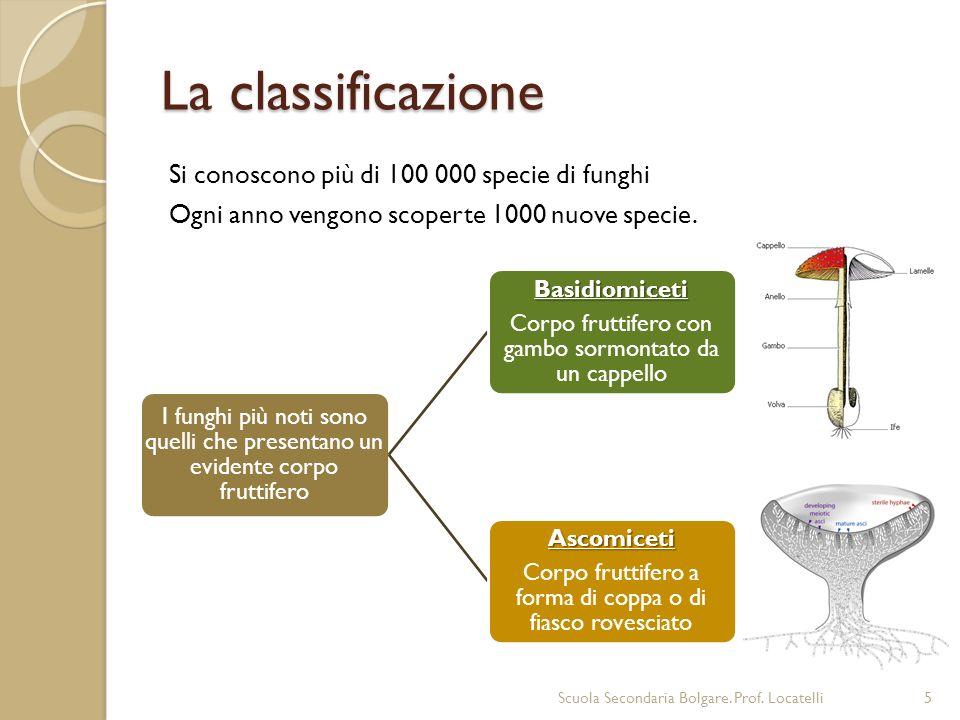 La classificazione Si conoscono più di 100 000 specie di funghi Ogni anno vengono scoperte 1000 nuove specie. Scuola Secondaria Bolgare. Prof. Locatel
