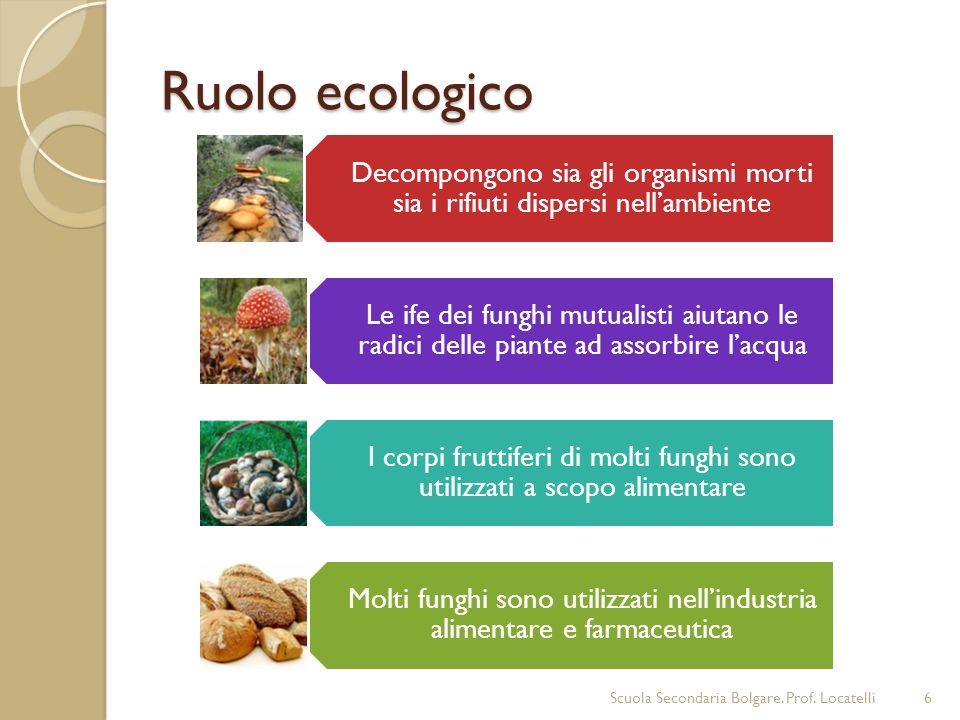 Decompongono sia gli organismi morti sia i rifiuti dispersi nellambiente Le ife dei funghi mutualisti aiutano le radici delle piante ad assorbire lacq