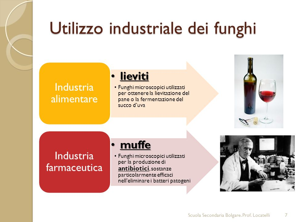 Utilizzo industriale dei funghi Scuola Secondaria Bolgare. Prof. Locatelli7 lievitilieviti Funghi microscopici utilizzati per ottenere la lievitazione