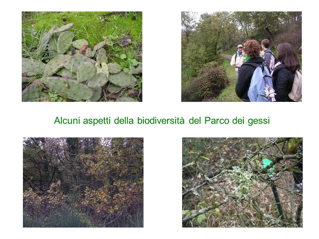 Un breve elenco delle specie vegetali e animali più significativi all interno del Parco dei Gessi