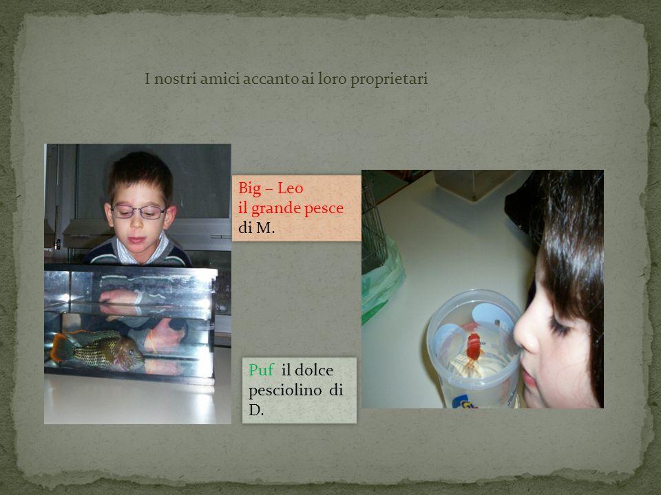 I nostri amici accanto ai loro proprietari Big – Leo il grande pesce di M. Big – Leo il grande pesce di M. Puf il dolce pesciolino di D. Puf il dolce