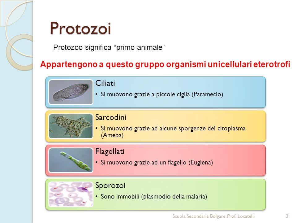 Protozoi 3Scuola Secondaria Bolgare. Prof. Locatelli Appartengono a questo gruppo organismi unicellulari eterotrofi Protozoo significa primo animale C