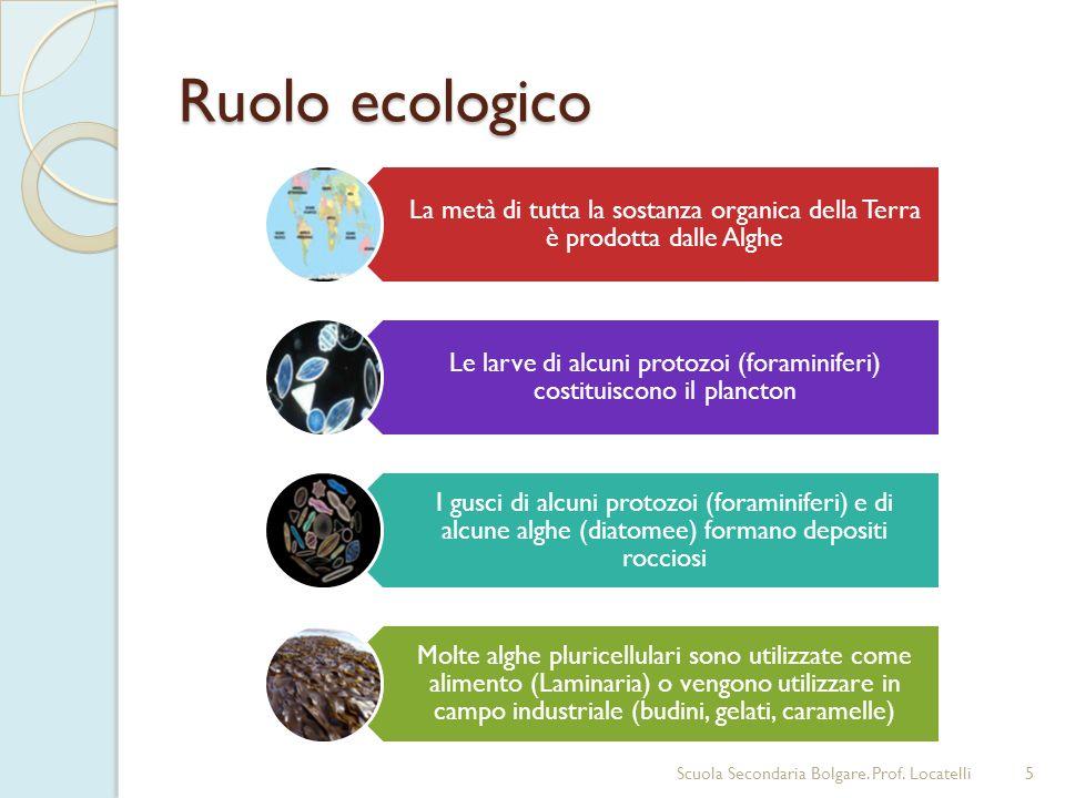 La metà di tutta la sostanza organica della Terra è prodotta dalle Alghe Le larve di alcuni protozoi (foraminiferi) costituiscono il plancton I gusci