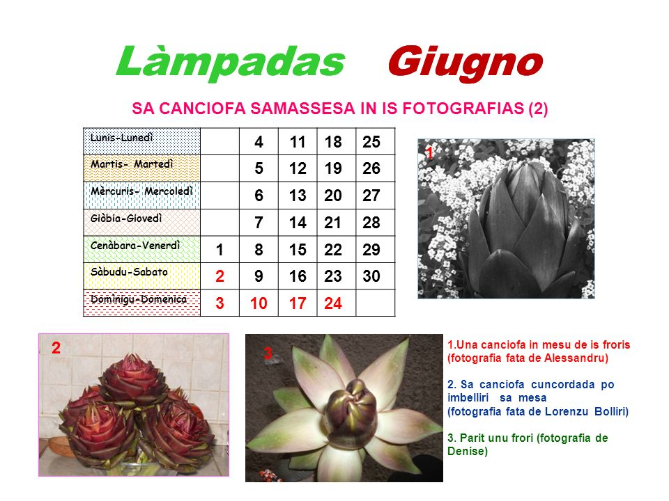 Làmpadas Giugno SA CANCIOFA SAMASSESA IN IS FOTOGRAFIAS (2) 1.Una canciofa in mesu de is froris (fotografia fata de Alessandru) 2. Sa canciofa cuncord