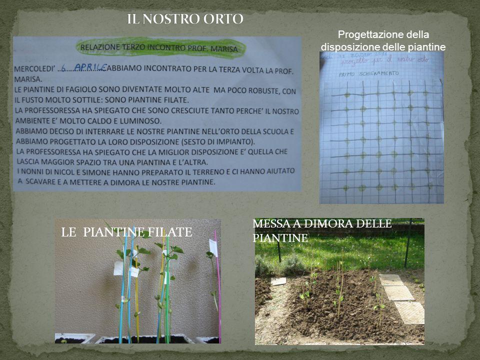 LE PIANTINE FILATE MESSA A DIMORA DELLE PIANTINE Progettazione della disposizione delle piantine