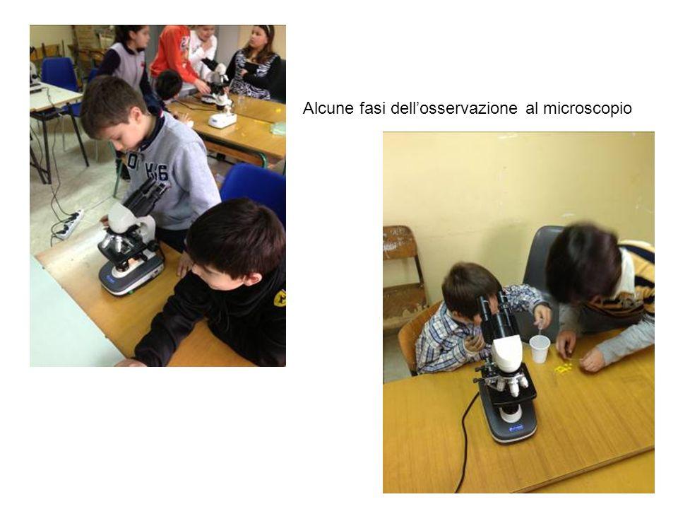 Alcune fasi dellosservazione al microscopio