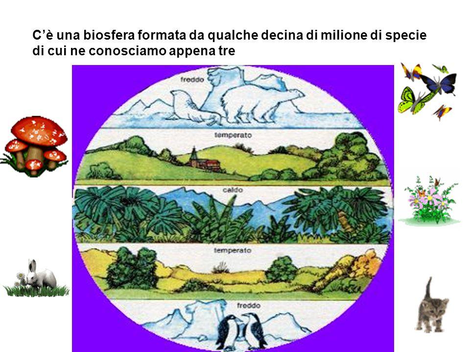 Cè una biosfera formata da qualche decina di milione di specie di cui ne conosciamo appena tre