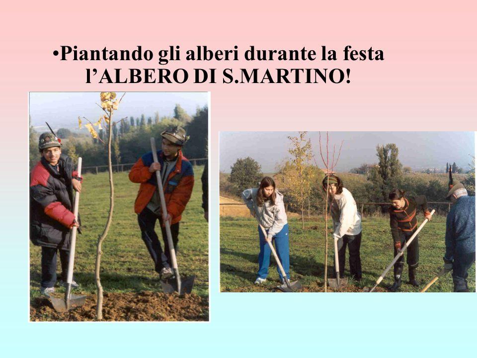 Piantando gli alberi durante la festa lALBERO DI S.MARTINO!