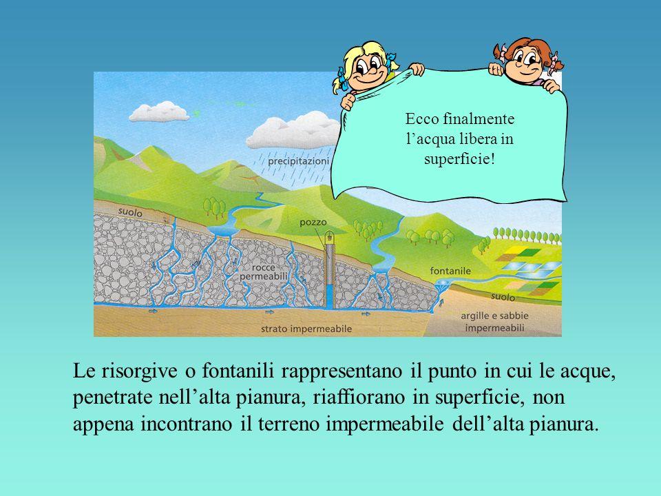 Le risorgive o fontanili rappresentano il punto in cui le acque, penetrate nellalta pianura, riaffiorano in superficie, non appena incontrano il terreno impermeabile dellalta pianura.