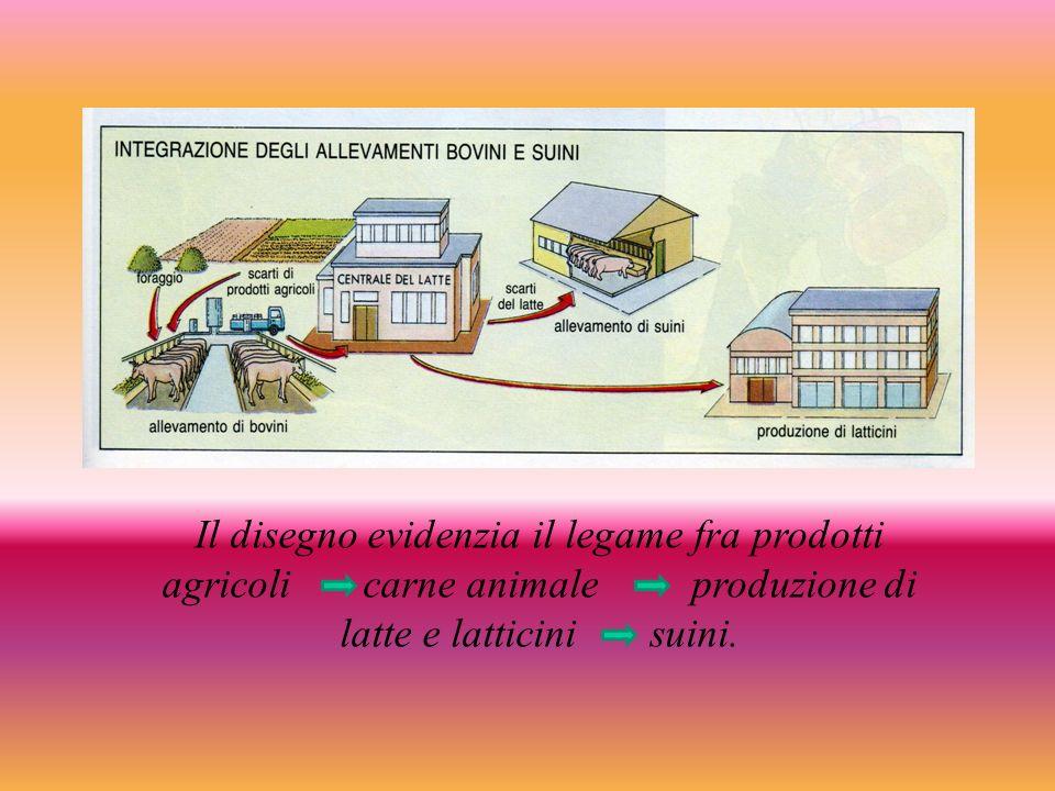 Il disegno evidenzia il legame fra prodotti agricoli carne animale produzione di latte e latticini suini.