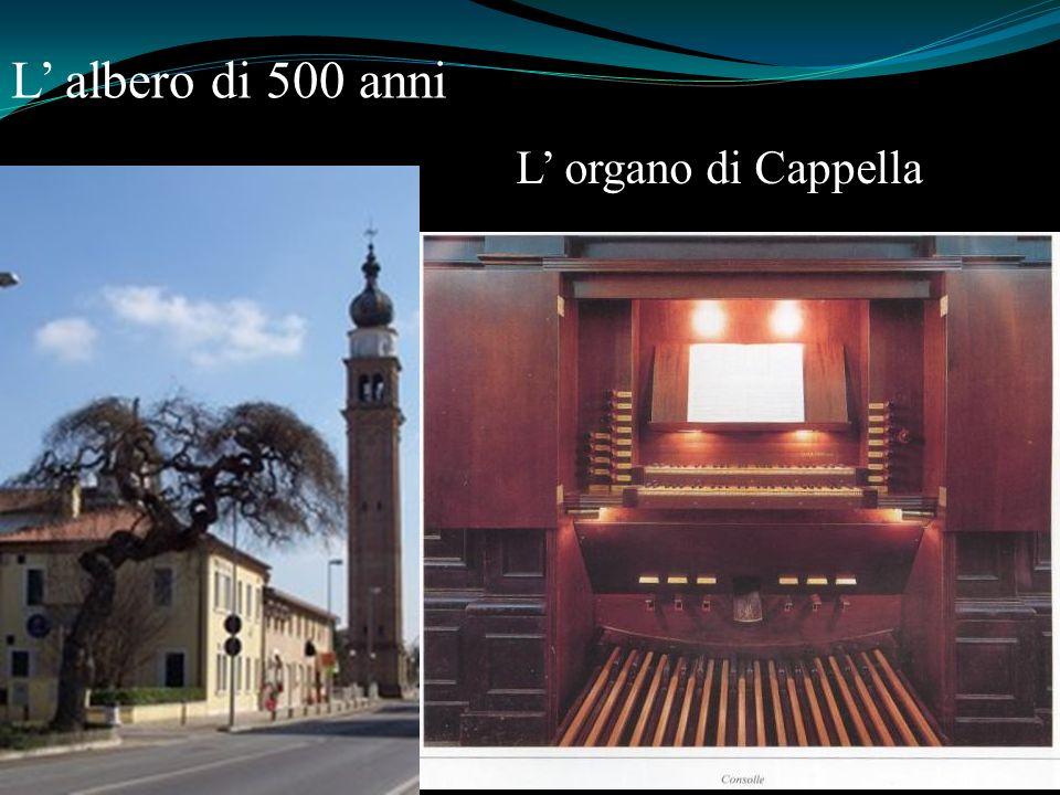 L albero di 500 anni L organo di Cappella