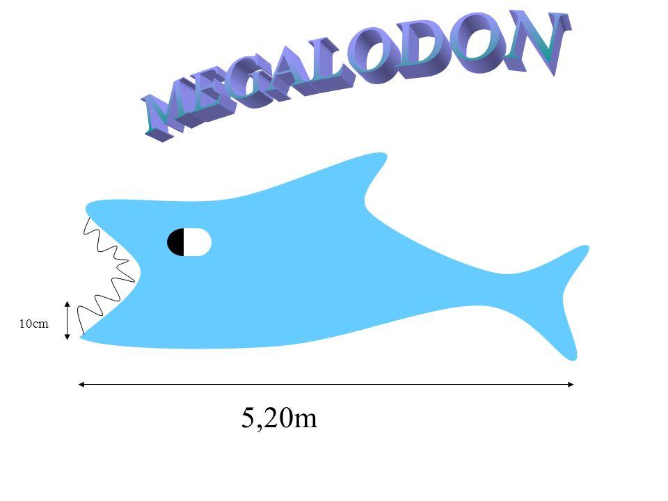 5,20m 10cm