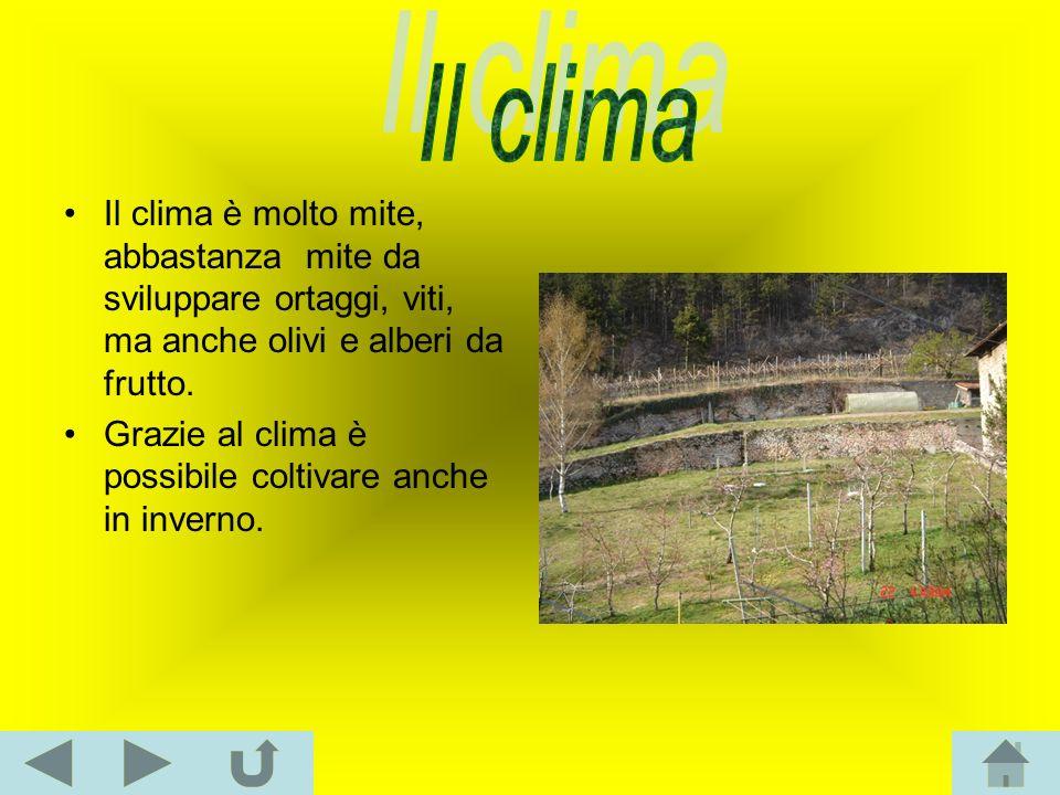 Il clima è molto mite, abbastanza mite da sviluppare ortaggi, viti, ma anche olivi e alberi da frutto. Grazie al clima è possibile coltivare anche in