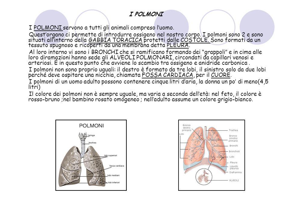 LESPIRAZIONE E LINSPIRAZIONE Il meccanismo della respirazione si compie in due fasi: INSPIRAZIONE ed ESPIRAZIONE.
