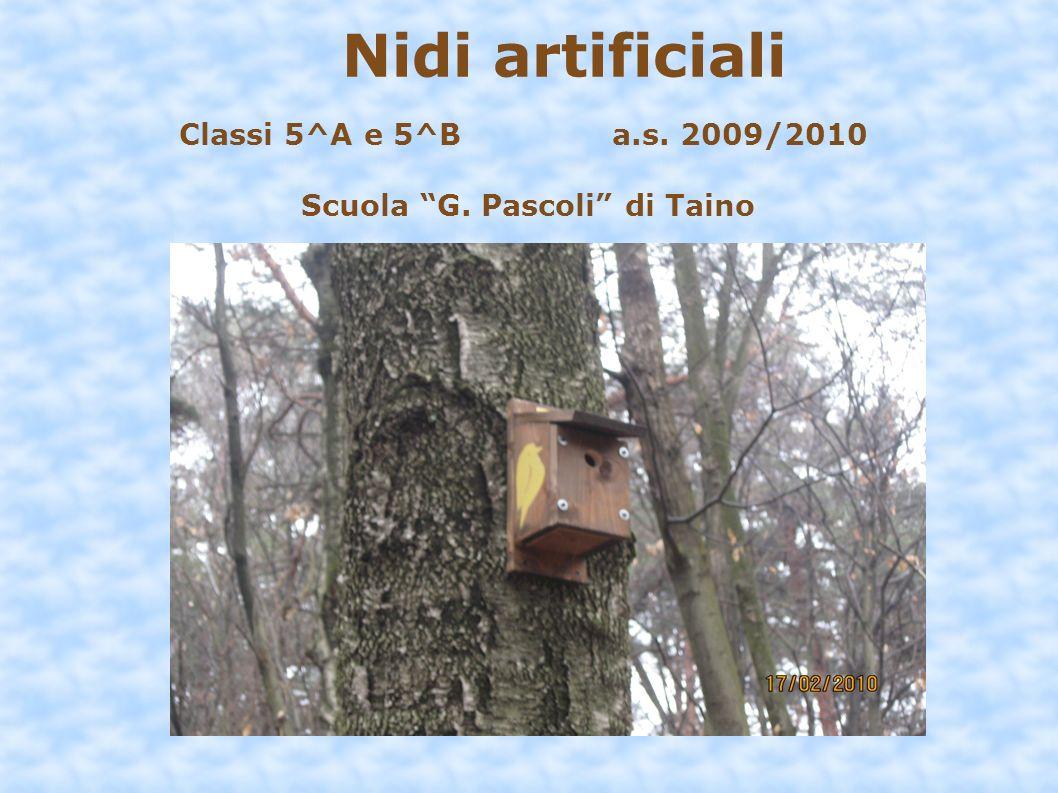 Nidi artificiali Classi 5^A e 5^B a.s. 2009/2010 Scuola G. Pascoli di Taino