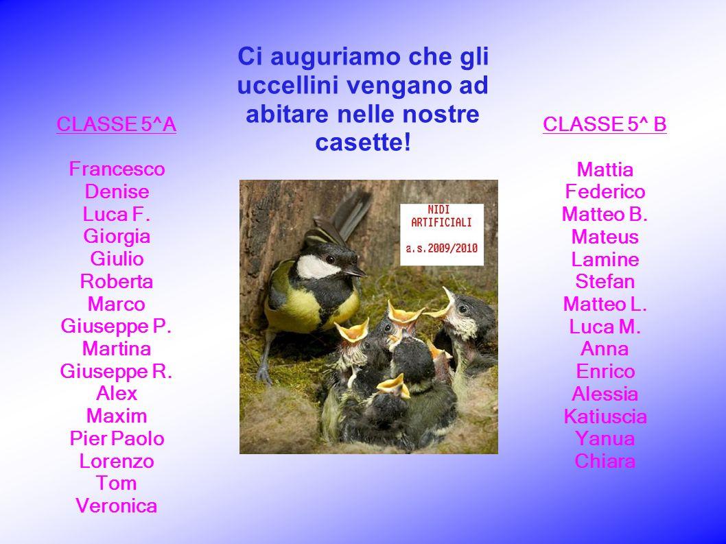 CLASSE 5^ B Mattia Federico Matteo B. Mateus Lamine Stefan Matteo L.