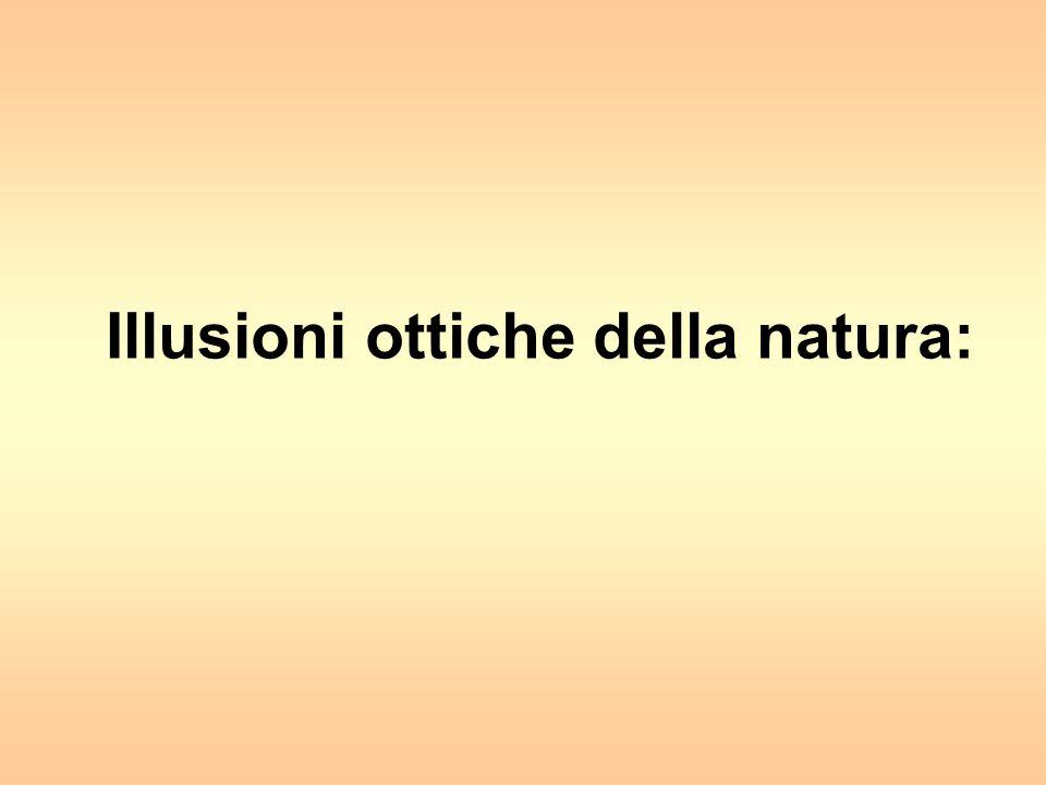 Illusioni ottiche della natura:
