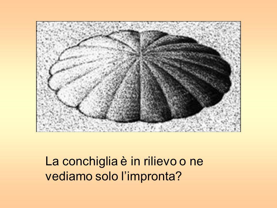 Spirali o cerchi concentrici?