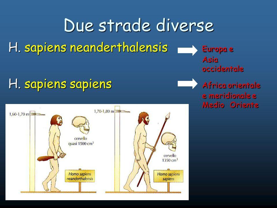 Due strade diverse H.sapiens neanderthalensis Europa e Asia occidentale H.